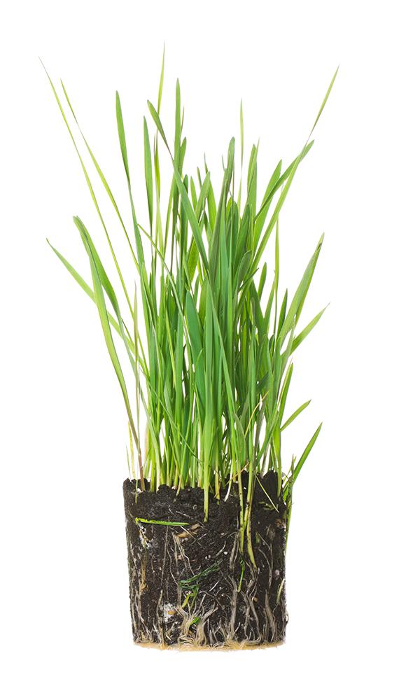 nutrienets_vegetales-servicios-600×1000